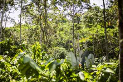 risks and returns family office investments in forests