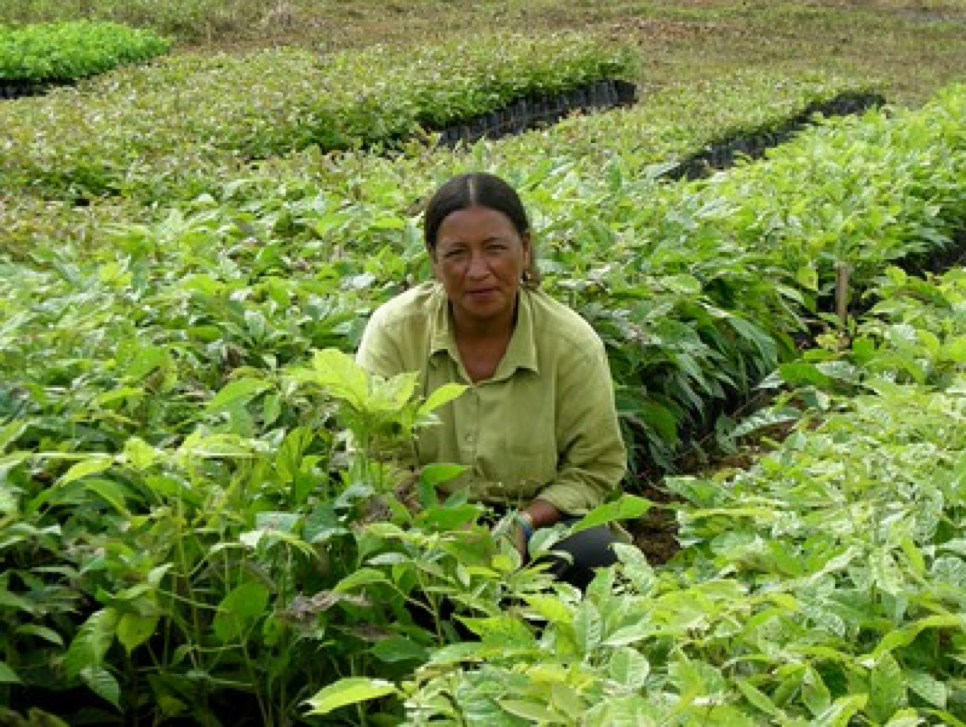 social family office investments in forests
