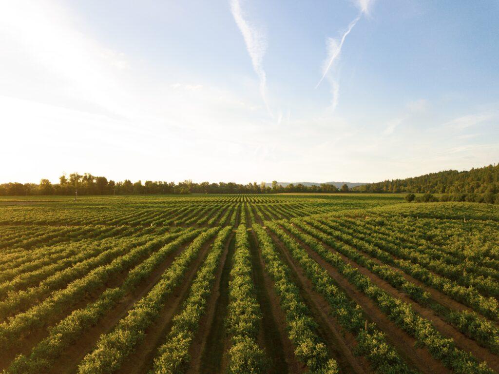 Fairfax Family Office Marinya Capital Acquires Farmland for $23M